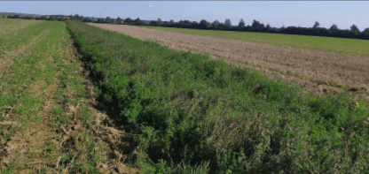 Carbo Nord Agro-foresterie