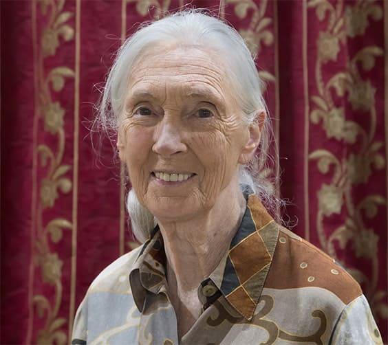 Jane Goodall, éthologue et anthropologue